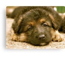 German Shepherd Puppy Canvas Print