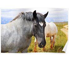 Beautiful Gray Draft Horse Poster