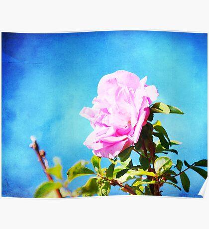 Pretty Pink Rose Bush   Poster