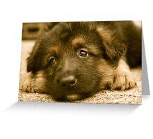 Puppy Dog Eyes-(German Shepherd Puppy) Greeting Card