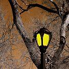 Lamp & Limbs by Brian Gaynor