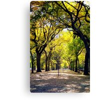 Avenue of Trees, Central Park, NYC Canvas Print