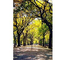 Avenue of Trees, Central Park, NYC Photographic Print
