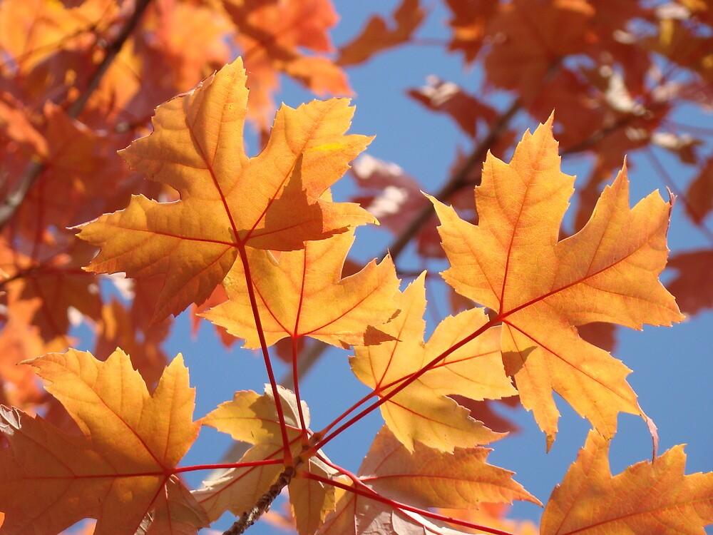 Autumn Leaves art prints Orange Glowing Leaf Blue Sky Baslee by BasleeArtPrints