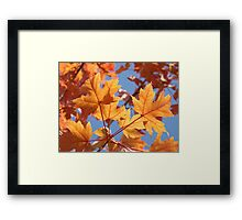 Autumn Leaves art prints Orange Glowing Leaf Blue Sky Baslee Framed Print