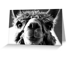 Say Cheese and Smile Pretty! Greeting Card