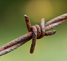 Barb Wire by CathyS