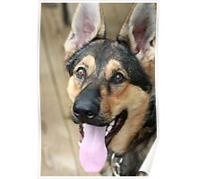Bindy, Our Fidelco Foster Pup Poster
