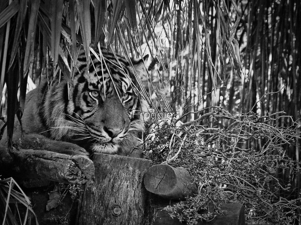 Hiding in the Jungle by Gerard Rotse