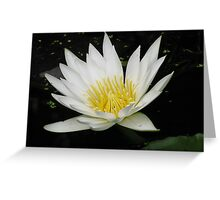 White Water Lilly by Colleen Stevenson Greeting Card