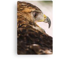 royal falcon Canvas Print