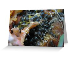 Rottern Fruit by Colleen Stevenson Greeting Card