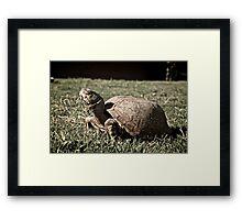 Desert Box Turtle Framed Print