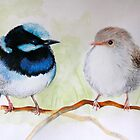 Blue Wrens by Jessica  Holliday