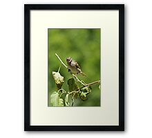 Are you squaking at me? Framed Print