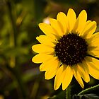 Lonely Sunflower by Ken  Hurst