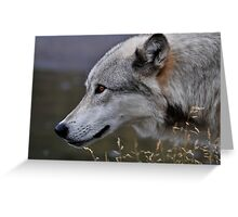 Yellowstone 2011 - Wolf Greeting Card