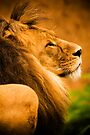 A lion in profile by Elana Bailey
