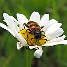 Bug on a daisy 2 by Irina777