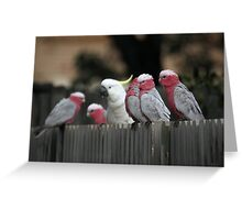 Galahs and Cockatoo Greeting Card