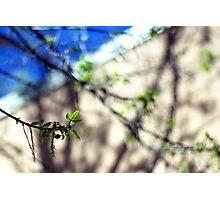 Sycamore Photographic Print
