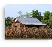 Cornfield Barn Canvas Print