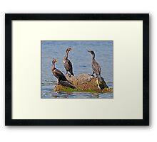 Avian Figurines Framed Print