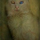 Wall-eyed cat - yeux vairons by Sonia de Macedo-Stewart