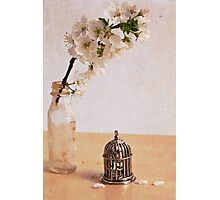 The caged Bird Sings Photographic Print