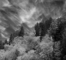 Cirrus Clouds by Gary L   Suddath