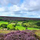 North York Moors, heather by apple88