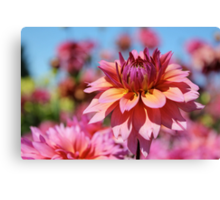 Sunset colors Dahlia Canvas Print