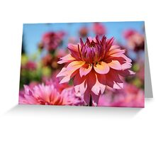 Sunset colors Dahlia Greeting Card