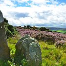 Rocks in the scenery, North Yorkshire Moors by apple88