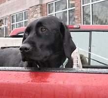 dogs in cars by dianadudley