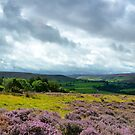 Looking out to Westerdale, North York Moors by apple88