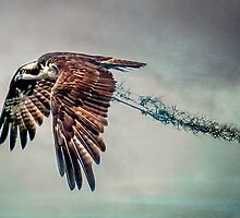 Osprey with Spanish Moss by Tarrby