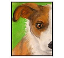 Mr Jack Russell Photographic Print