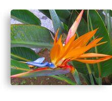 Strelitzia - or paradise flower Canvas Print