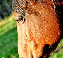 Horse Close Up by Laurast