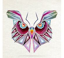 owl or butterfly? Photographic Print