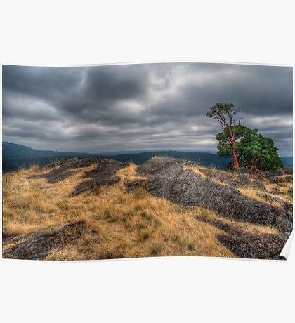 Arbutus Tree Poster