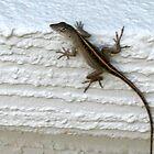 Lizard by LadyBolet