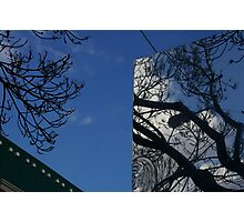 One Tree, Two Viewpoints Photographic Print