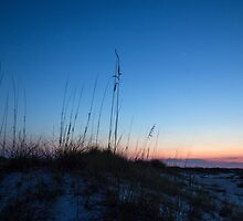 Grasses at Sunset by Lynn Gedeon