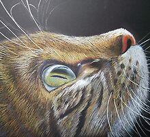 CAT EYE by jorgematins