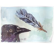 A Crow's Wing Feather Poster