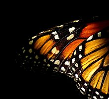 Monarch Butterfly Wing by Tamara  Kenneally