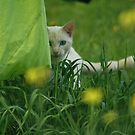 Hide and Seek by Sam Adele Haggan