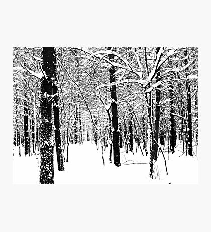 Black and White Winter Forest Photographic Print